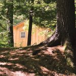 New Property – Cabin with Trees