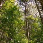 New Property – Trees